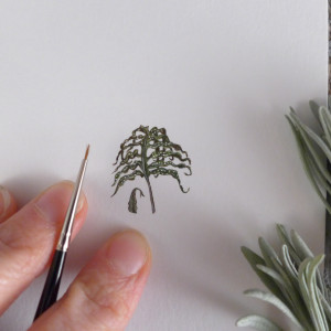 Blue star fern, Phlebodium, miniatura, akwarela,