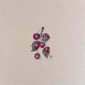 Czereśnie, Botanical illustration, miniatura