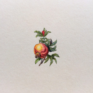 Granat, Botanical illustration, miniatura