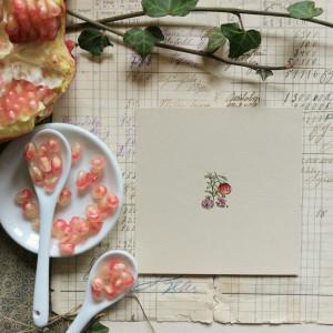Granaty, Botanical illustration, miniatura