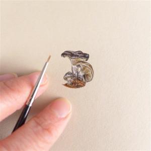 Grzyby, miniatura 2,5 cm ! Ilustracja botaniczna