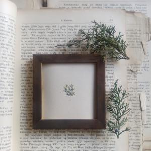Jagody, Botanical illustration, miniatura