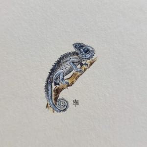 Kameleon, miniatura