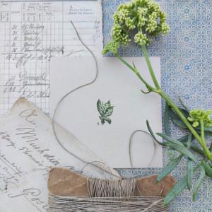 Konwalie,  Botanical illustration, miniatura