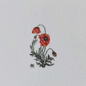 Maki ,Botanical illustration
