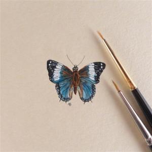 Motyl , owad, miniatura, obrazek