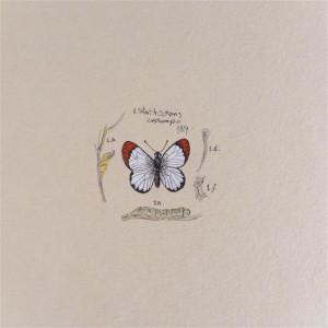 Motyl IV szkicownik, miniatura, obrazek