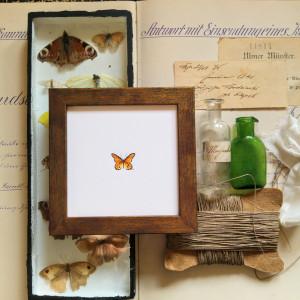 Motyl pomarańczowy , owad, miniatura, obrazek