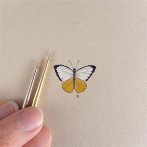 Motyl żółty , owad, miniatura, obrazek