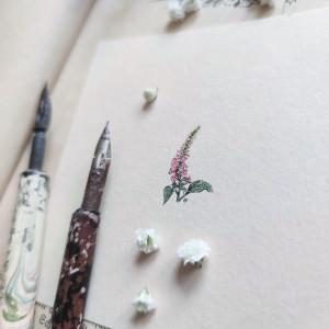 Naparstnica, Botanical illustration, miniatura