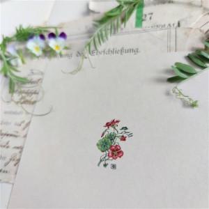 Nasturcja Botanical illustration, miniatura