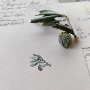 Oliwki, Botanical illustration, miniatura