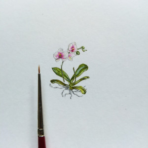 Orchidea,  Botanical illustration, miniatura
