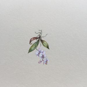 Orchidea, Storczyk,  Botanical flowers