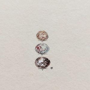Ptasie jajka, miniatura ręcznie malowana