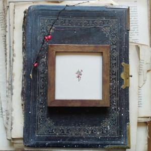Rosa rubiginosa, dzika róża, miniatura, akwarela