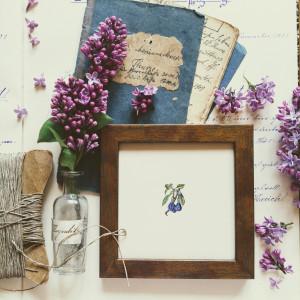 śliwki, Botanical illustration, miniatura