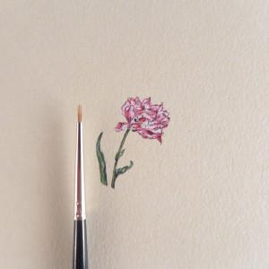 Tulipan, Botanical illustration, miniatura