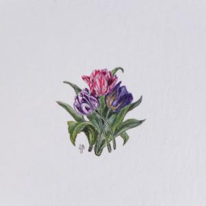 Tulipany, Botanical illustration, miniatura