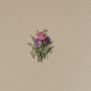 Tulipany, Botanical illustration, miniatura ecru