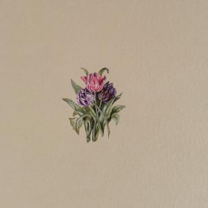 Tulipany, Botanical illustration, miniatura ecru
