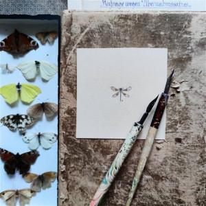 Ważka , owad, miniatura, obrazek