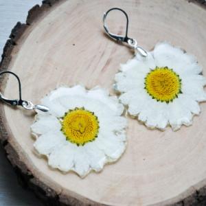 Zatopki kwiaty Daisy