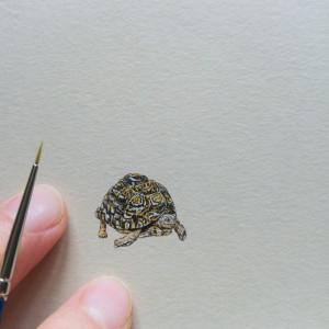 Żółw lamparci, Mała Piątka Afryki, miniatura